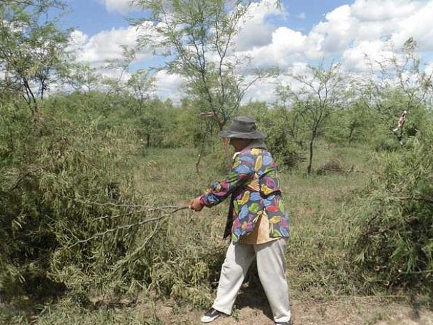Mujeres como forestadoras demostradoras